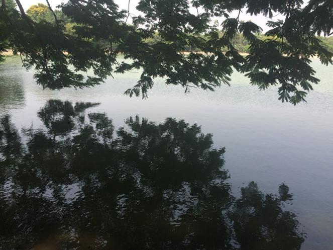 pond.JPG